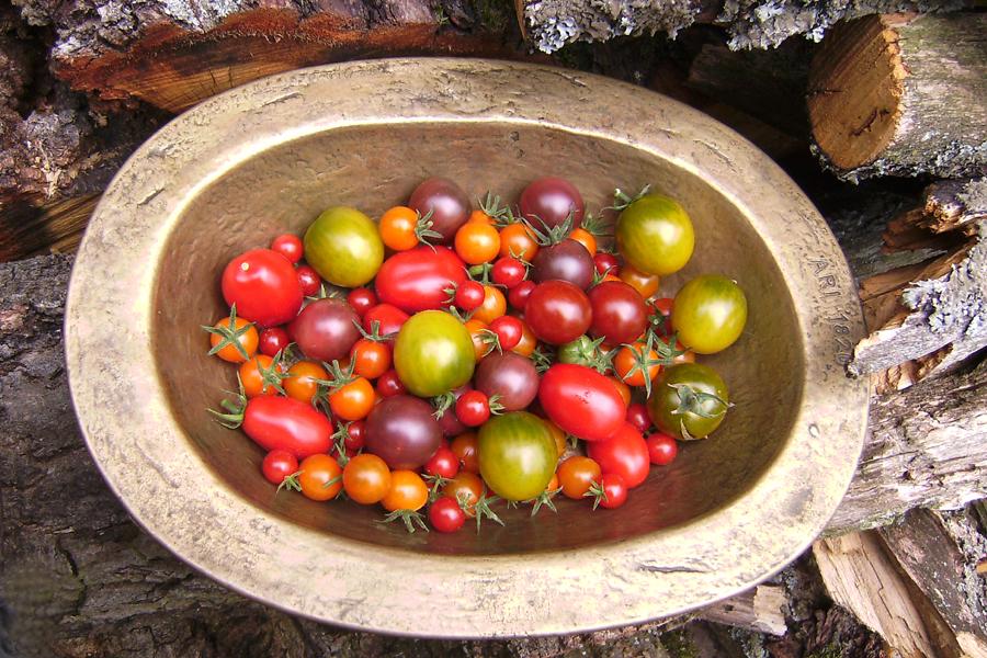 tomatensorten im kr utergarten glash tte amish cherry. Black Bedroom Furniture Sets. Home Design Ideas
